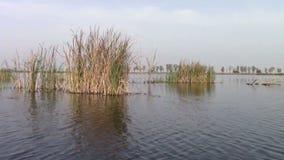 Lago Comana Foto de archivo libre de regalías