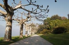 Lago Como Autumn Time Vacaciones europeas, estilo de vida vivo, arquitectura y concepto del viaje Carril de Platan, jardín, chale Imagen de archivo libre de regalías