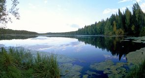 Lago con acque pulite in legno. Fotografia Stock Libera da Diritti