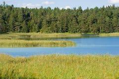 Lago con alta erba Fotografie Stock