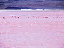 Lago con el flamenco Fotografía de archivo libre de regalías