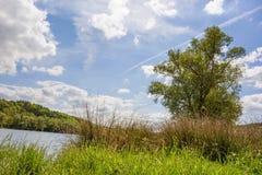 Lago con erba e la canna Fotografia Stock Libera da Diritti