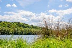Lago con erba e la canna Fotografia Stock