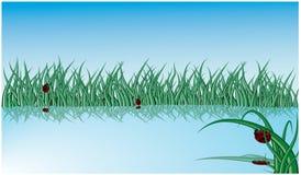 Lago con erba ed i ladybugs Immagini Stock Libere da Diritti