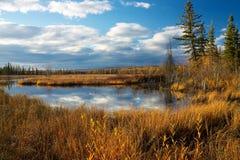 Lago con erba gialla asciutta Immagine Stock