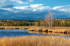 Lago con erba gialla asciutta Fotografia Stock Libera da Diritti