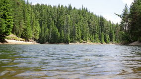 Lago con gli alberi di pino ventoso stock footage