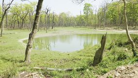 Lago con il coccodrillo in foresta pluviale nel parco nazionale Chitwan, Nepal stock footage