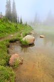 Lago con la arena amarilla y rocas en la niebla: rastro con los abetos. Imagen de archivo libre de regalías
