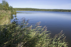 Lago con la canna Immagini Stock Libere da Diritti