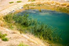Lago con la canna verde nella natura Fotografia Stock