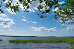 Lago con la hierba que crece en el agua imagenes de archivo