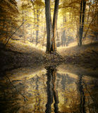 Lago con la reflexión del árbol en un bosque colorido en otoño Fotografía de archivo