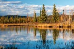 Lago con la riflessione di erba e degli alberi gialli asciutti Immagini Stock Libere da Diritti