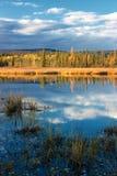 Lago con la riflessione di erba e degli alberi gialli asciutti Fotografie Stock