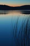 Lago con las cañas. Foto de archivo libre de regalías