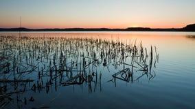 Lago con las cañas Imagen de archivo libre de regalías