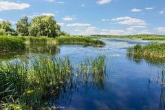 Lago con las cañas y los lirios de agua Fotografía de archivo libre de regalías