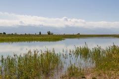 Lago con le canne Fotografia Stock