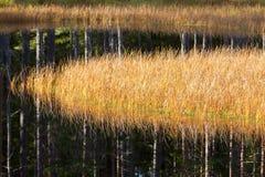 Lago con le canne in autunno Fotografia Stock Libera da Diritti