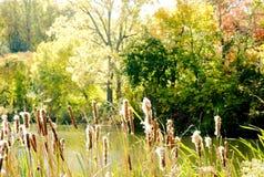 Lago con le canne il giorno soleggiato Immagine Stock