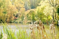Lago con le canne il giorno soleggiato Fotografia Stock