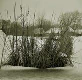 Lago con le canne, neve, acqua dello zasnezhenoe di inverno immagini stock libere da diritti