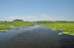 Lago con le ninfee nel delta di Danubio, Romania Immagine Stock