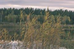 lago con le riflessioni dell'acqua nel effe variopinto dell'annata di giorno di autunno Fotografia Stock