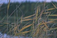 lago con le riflessioni dell'acqua nel effe variopinto dell'annata di giorno di autunno Fotografie Stock Libere da Diritti