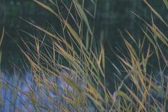 lago con le riflessioni dell'acqua nel effe variopinto dell'annata di giorno di autunno Immagini Stock