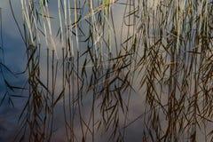 lago con le riflessioni dell'acqua nel giorno variopinto di autunno Fotografia Stock Libera da Diritti