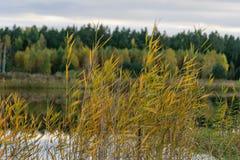 lago con le riflessioni dell'acqua nel giorno variopinto di autunno Fotografie Stock