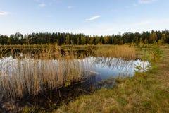 lago con le riflessioni dell'acqua nel giorno variopinto di autunno Fotografie Stock Libere da Diritti