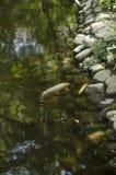 lago con le rive rocciose e la carpa giapponese Immagini Stock