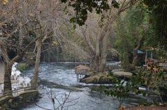 Lago con los árboles Fotografía de archivo libre de regalías