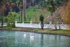 Lago con los cisnes foto de archivo libre de regalías