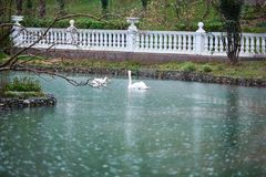 Lago con los cisnes imagenes de archivo