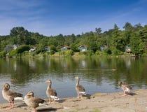 Lago con los gooses y el tiempo de las casas de campo gratis Foto de archivo