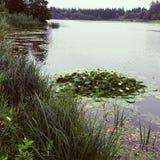 Lago con los lirios de agua Fotos de archivo