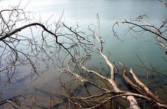 Lago con madera muerta Foto de archivo libre de regalías
