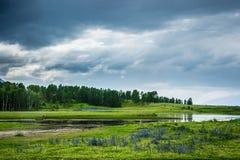 Lago con un pescatore ed i fiori immagini stock