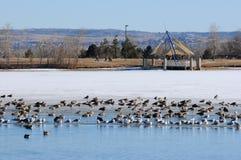 Lago congelado em um parque do inverno foto de stock royalty free