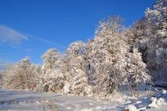 Lago congelado en el invierno Imagen de archivo
