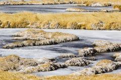 Lago congelado en reserva nacional de los flamencos del Los Fotos de archivo libres de regalías