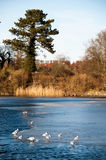 Lago congelado metade na área do castelo de Frederiksborg em Hillerod Imagens de Stock