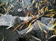 Lago congelato Immagini Stock Libere da Diritti