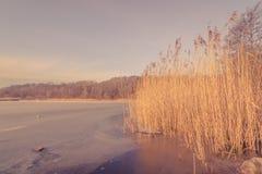 Lago congelato con le canne alte Immagine Stock Libera da Diritti