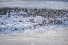 Lago congelato e canne coperti di brina e di neve al sole Fotografia Stock Libera da Diritti