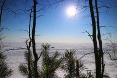 Lago congelato nei rami del pino Fotografia Stock